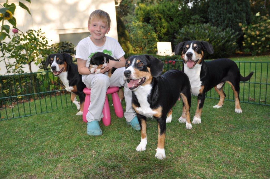 2014-09-DSC_7510 Benni +4 Hunde