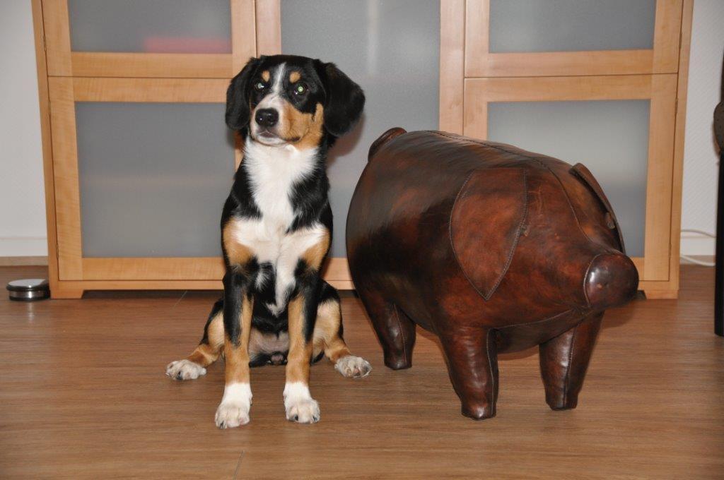 2015-02-DSC_9276 Ayla mit Schwein